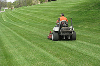 Domestic / Commercial Mowing